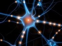 Polska wersja STATISTICA Neural Networks